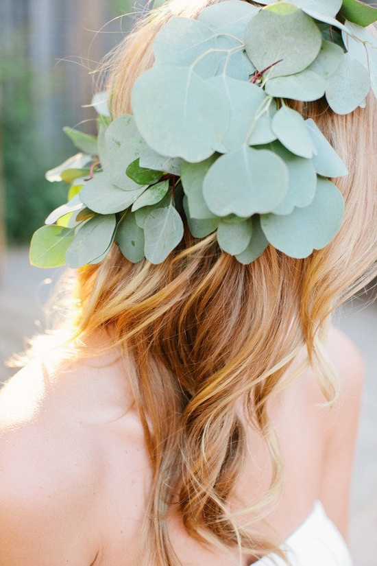 eucalyptus crown