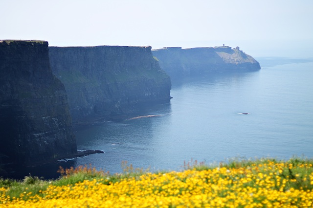 Cliffs Of Moher flowers | Two Delighted