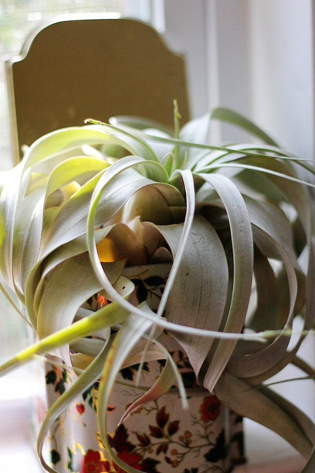 HappeningsAug13airplant | Two Delighted