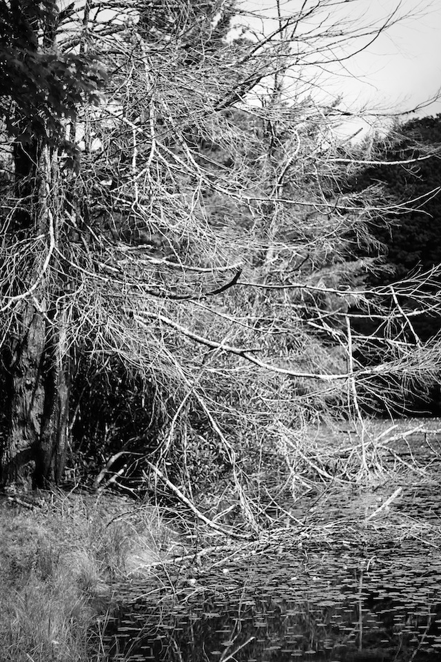 Blowing Rock dead tree | Two Delighted