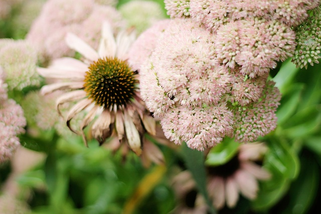 Blowing Rock flower | Two Delighted