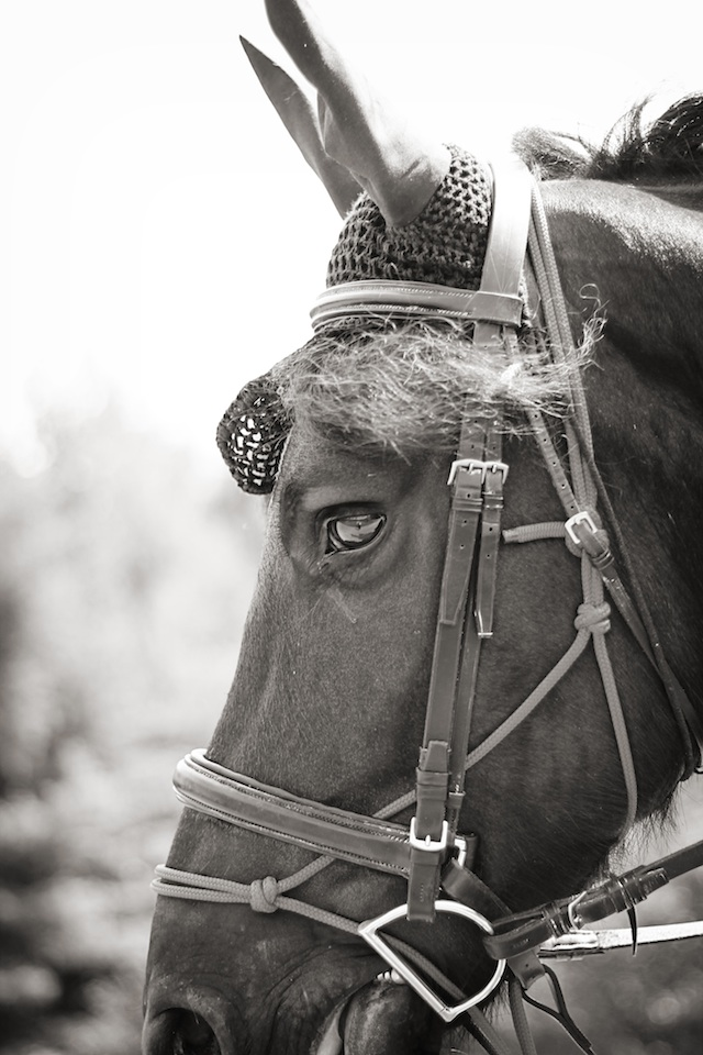 Blowing Rock horse | Two Delighted