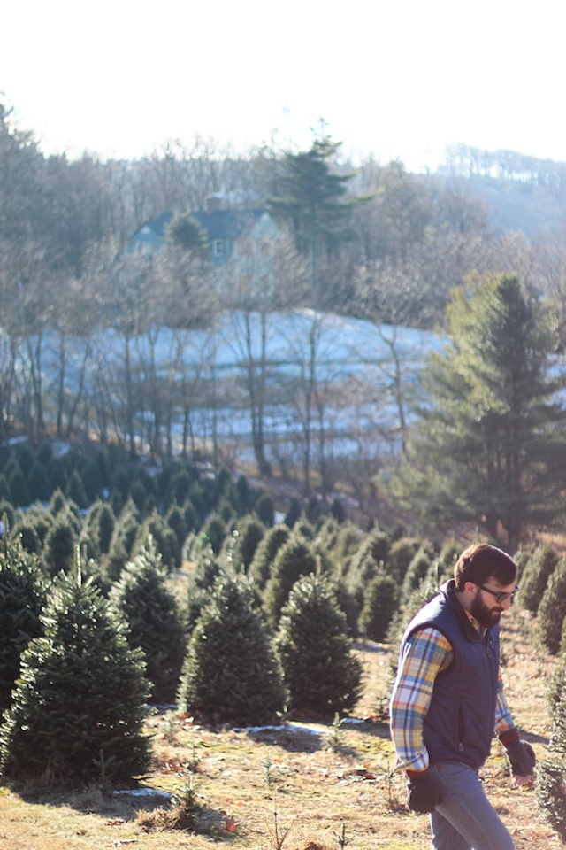 happenings 12:20 tree farm