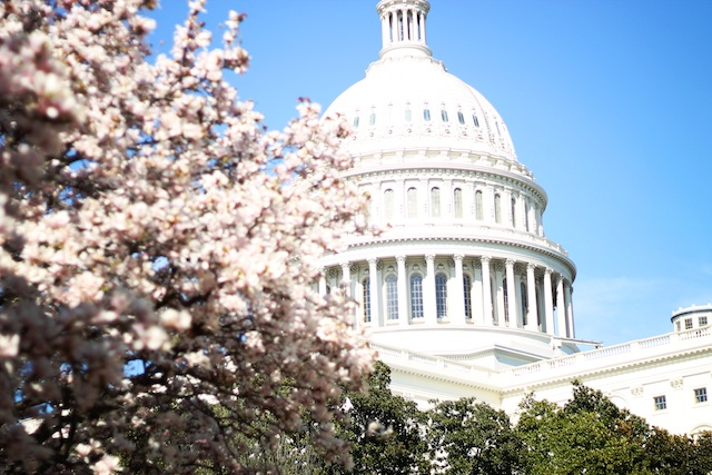 capitol blooms | Two Delighted