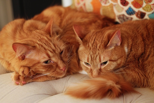 happenings 4.9.14 cats | Two delighted