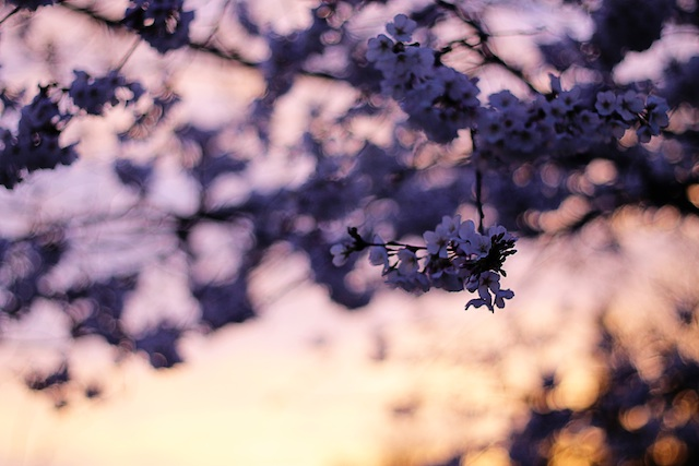 happenings 4.9.14 tree | Two delighted