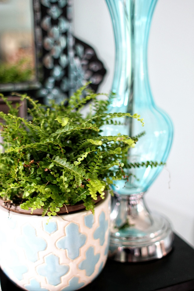planty things button fern blog