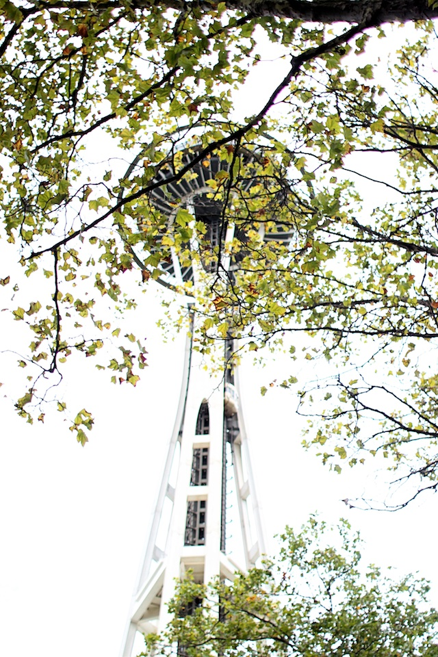 space needle trees blog